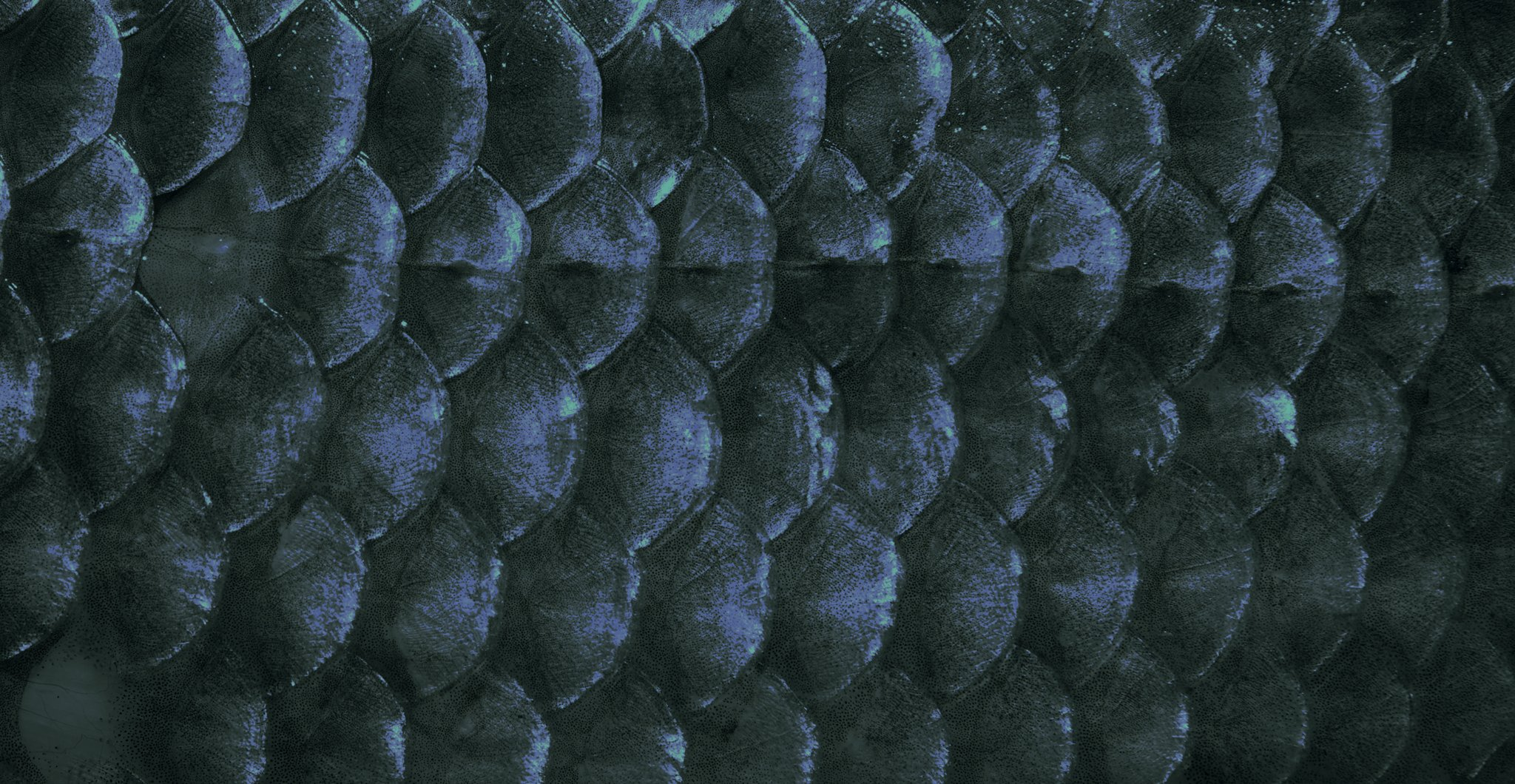 Outlaw's header image of fish scales